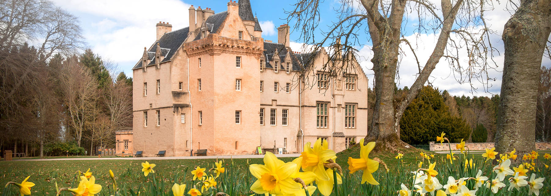 Brodie Castle and grounds, with daffodils in foreground
